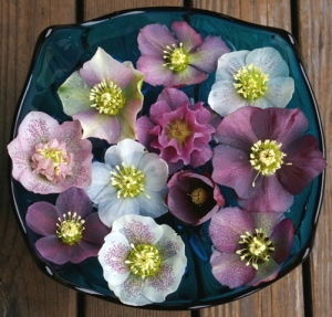Hellebore blossoms float in a vintage, glass compote