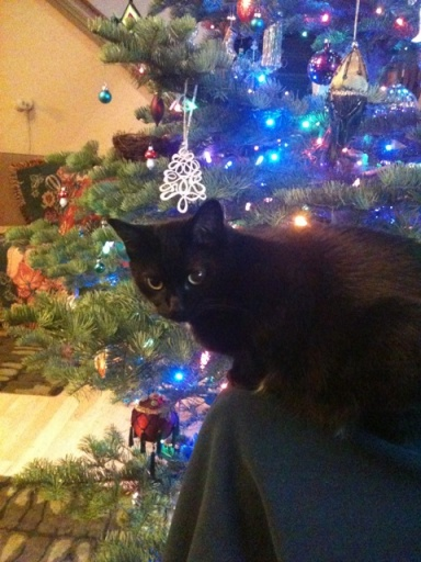 Happiness is a sweet cat and a noble fir