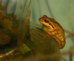 frog on vase blog