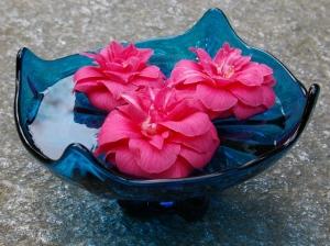 floating camellias blog