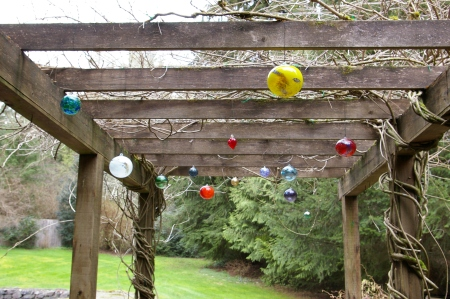 Globes stand out when wisteria is dormant