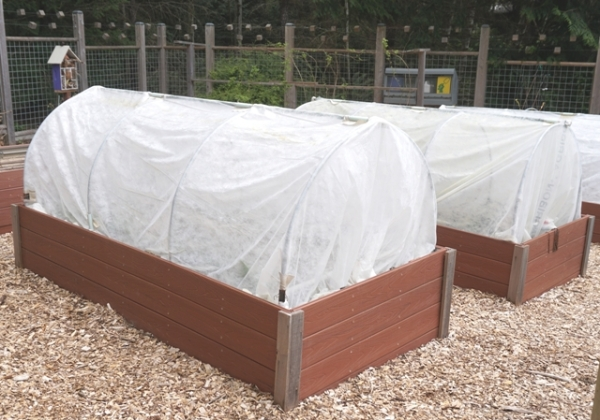raised beds big picture small